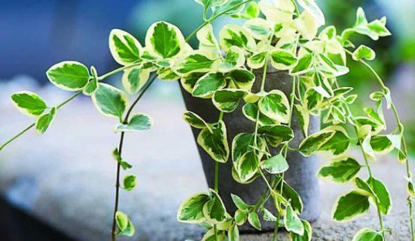 室内で育つ観葉植物のイメージ