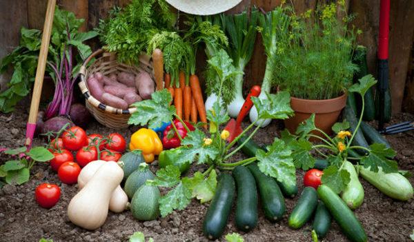 家庭菜園で栽培した野菜のイメージ