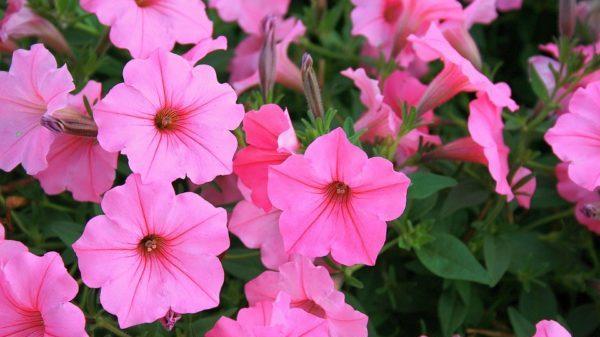 春に咲く花のイメージ