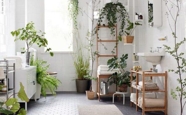 トイレの中の観葉植物のイメージ